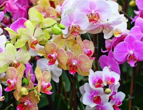 Berbicara dengan bunga kendurkan tekanan mental